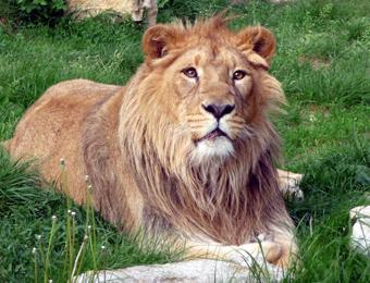 Lion de la Citadelle de Besançon